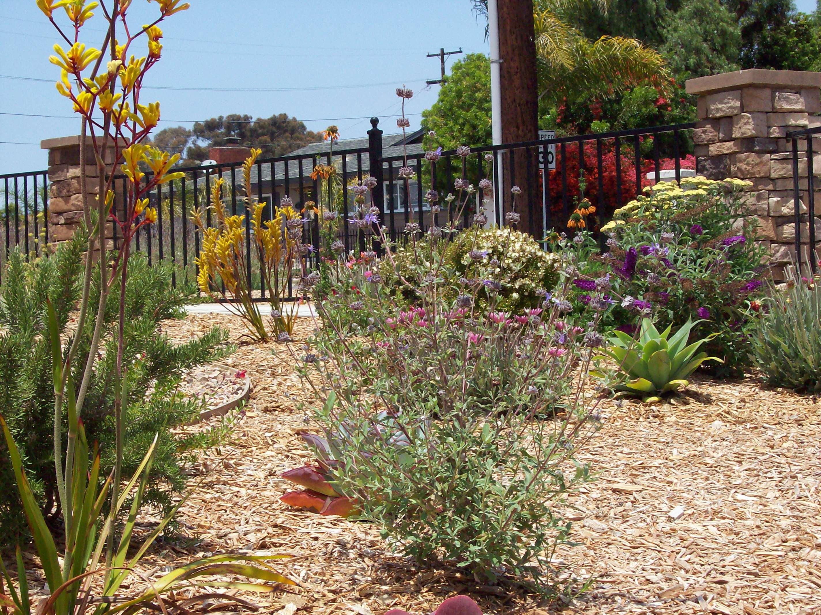 Front Yard Design San Diego