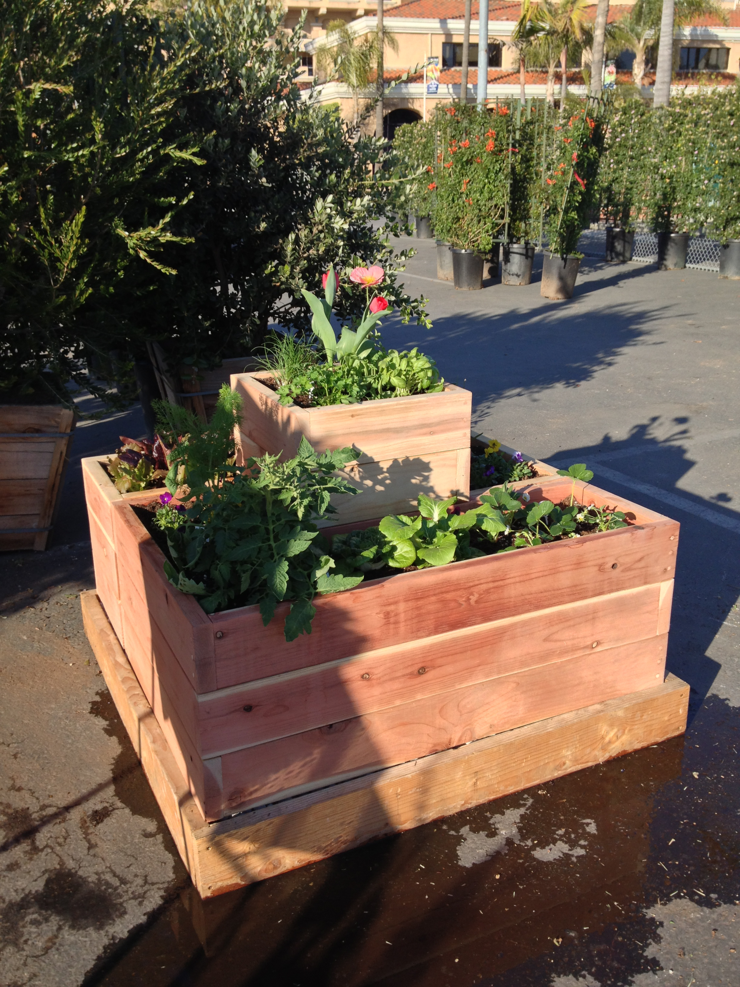 Botaniscapes By Tracey Blog Archive Growing Vegetables